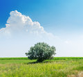 Tree on green landscape under white clouds in blue sky Royalty Free Stock Photo