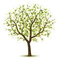 Árbol verde deja