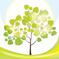 Tree with green leaves, sunny day Stock Photography