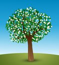Tree with green leaves and white flowers Royalty Free Stock Photos