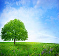 Tree in green meadow Stock Images
