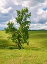 Tree on a green meadow against a blue sky with clouds Royalty Free Stock Photo