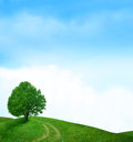 Tree in green meadow Royalty Free Stock Photo