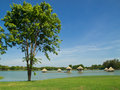 Tree green park shade the eyes Royalty Free Stock Image