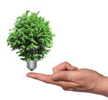 Tree growing from the base of the light bulb Stock Photos