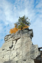 Tree growing on a cliff face Stock Photo