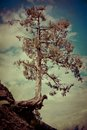 Tree growing on the cliff rock over cloudy sky image in vintage style india Royalty Free Stock Photo