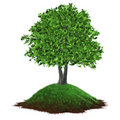 Tree growing on a grassy hill Stock Photos