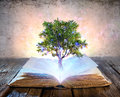 Tree Growing From The Old Book Royalty Free Stock Photo