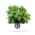 Tree growing out bulb white background green energy eco concept Royalty Free Stock Images