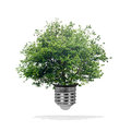 Tree growing out bulb white background green energy eco concept Stock Images