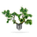 Tree growing out bulb white background green energy eco concept Stock Photo