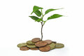 Tree growing from pile of euro coins Royalty Free Stock Photo