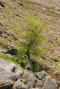 Tree growing from rocky outcrop derbyshire england Stock Photos