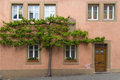 Tree growing on the wall with door and windows in Europe Royalty Free Stock Photo