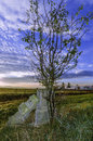 Tree grown near tomb cross and wtih a the road for someone who died in car accident red dawns background and beautiful blue sky Royalty Free Stock Images