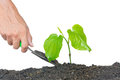 Tree and hand isolate on white background gardening Stock Photos