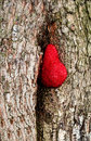 Tree with heart background a red Stock Photos