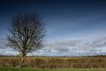 Tree and hedgerow in front of field cloudy sky Stock Photo
