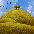 Tree on the hill with flock of birds Stock Photo