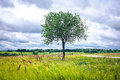 The tree on the hill Royalty Free Stock Photo