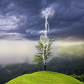 Tree on the hill struck by lightning. Royalty Free Stock Photo