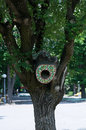 Tree hollow with nest in park Stock Photos