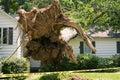 Tree house damage Royalty Free Stock Photo