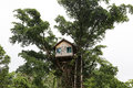 Tree House in the Jungle in Vanuatu Royalty Free Stock Photo