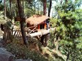 Tree House In Pinus Tropical F...