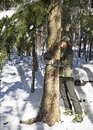 Árbol en bosque