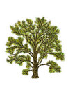 Tree illustration Royalty Free Stock Images
