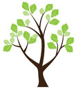 Tree illustration of a with green leaves Stock Images