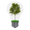 Tree inside lightbulb Stock Image