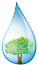 A tree inside the water drop illustration of on white background Royalty Free Stock Image