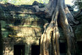 Tree invading Ta Prom temple in Angkor Royalty Free Stock Images