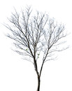 Tree isolated against a white background Royalty Free Stock Photo