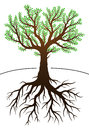 Tree and its roots illustration with green leaves Royalty Free Stock Photos