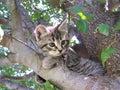 Tree Kitty Royalty Free Stock Photo