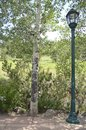 Tree lamp post and greenery and along an outdoor nature walkway Stock Image