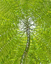Tree and leaf canopy Royalty Free Stock Photo