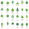 Tree leaf icon Stock Photography