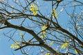 Tree leaves Royalty Free Stock Photo