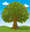Tree with Leaves Royalty Free Stock Photography