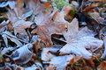 Tree leaves covered by frost Royalty Free Stock Photo