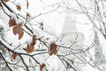 Tree leaves covered with snow Royalty Free Stock Photo