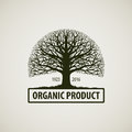 Tree without leaves. Nature or ecology logo. Oak icon. Organic product