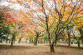 Tree leaves in the park change color to orange and red Royalty Free Stock Photo