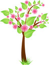 Tree with leaves and pink flowers Stock Image