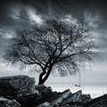 Tree without leaves with swing on seashore stands a rocky Stock Photo